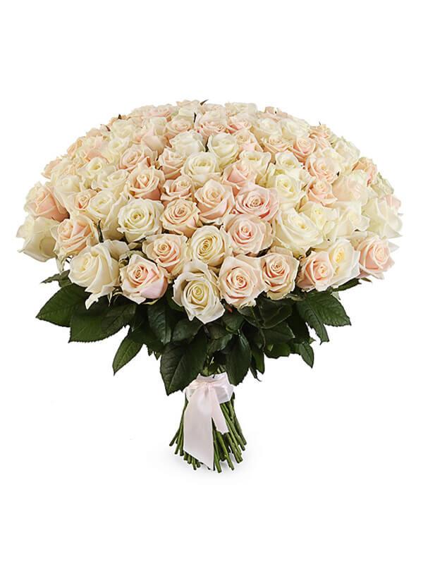 101 белая и кремовая роза