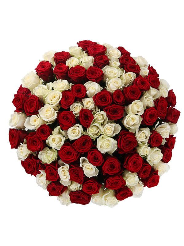 101 красная и белая роза 2