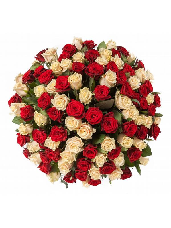 101 красная и кремовая роза 2