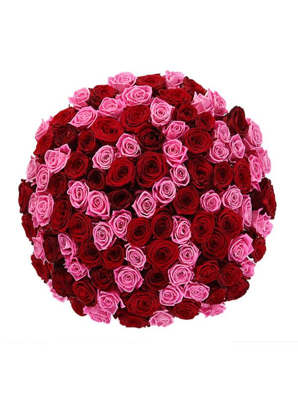 101 красная и розовая роза