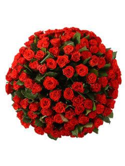 101 красная роза 50см 2