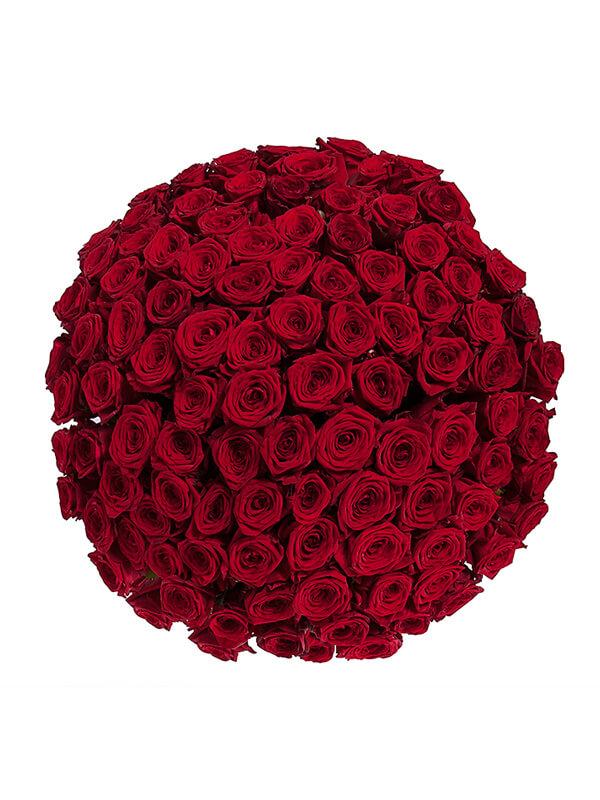 101 красная роза 70 см 2