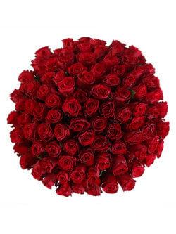 101 красная роза сорта Хартс 2