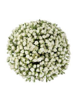 101 кустовая белая роза