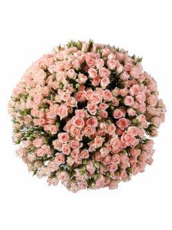 101 кустовая розовая роза