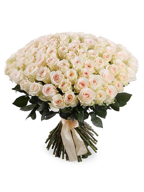 101 нежно-розовая роза сорта Сеньорита