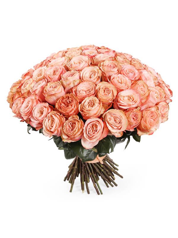 101 пионовидная роза сорта Кахала