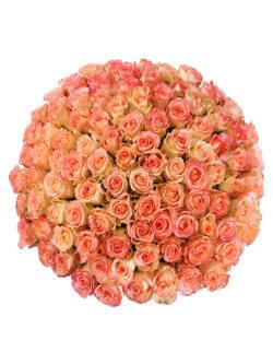 101 роза дуэт