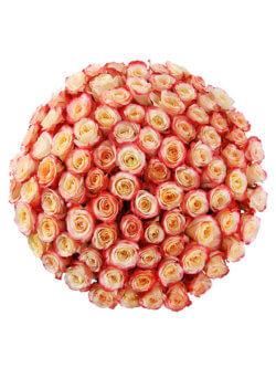 101 роза кабарет
