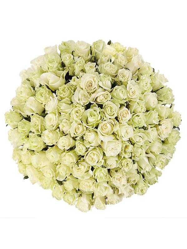 101 роза мондиаль