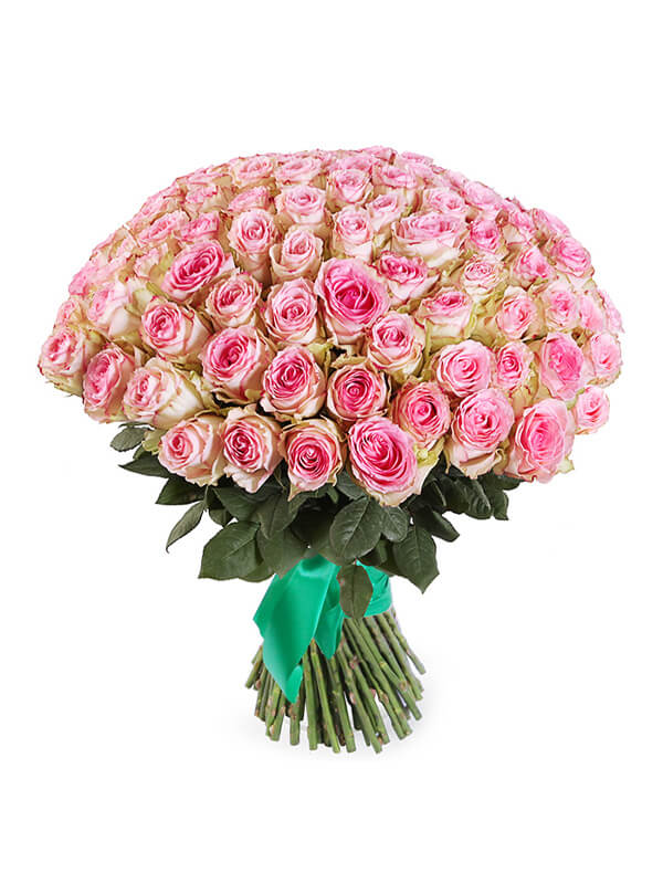 101 розово-белая роза сорта Эсперанс