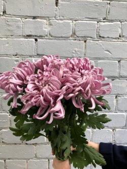 Букет хризантем сорта Viena Pink